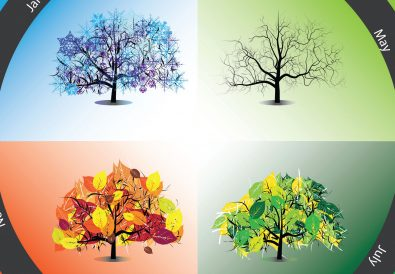 trees in the four seasons