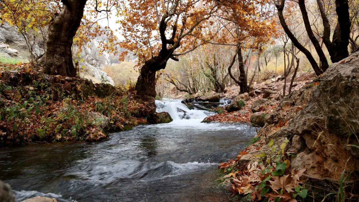 flowing creek