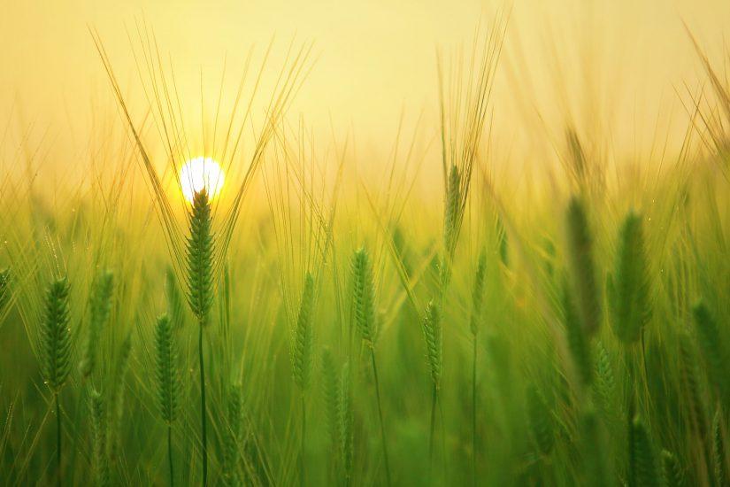 landcape with sun