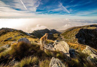 Dog on mountain top