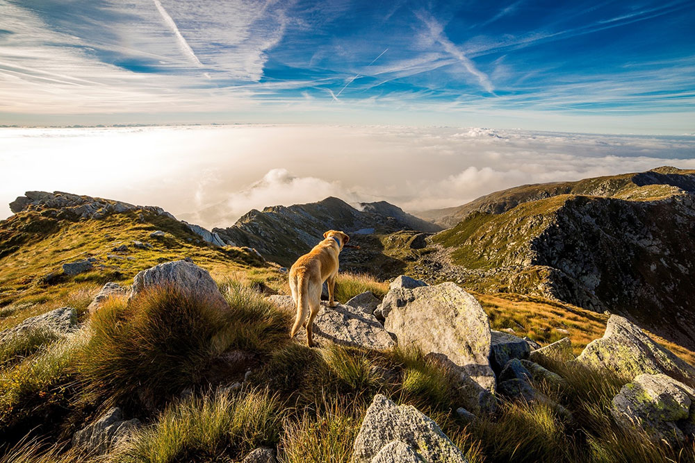 Dog on mountain top
