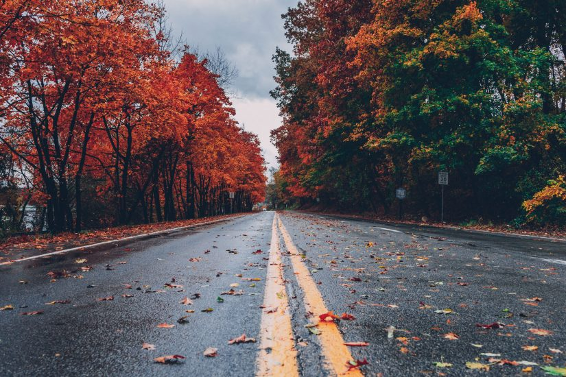 road with autumn leaves