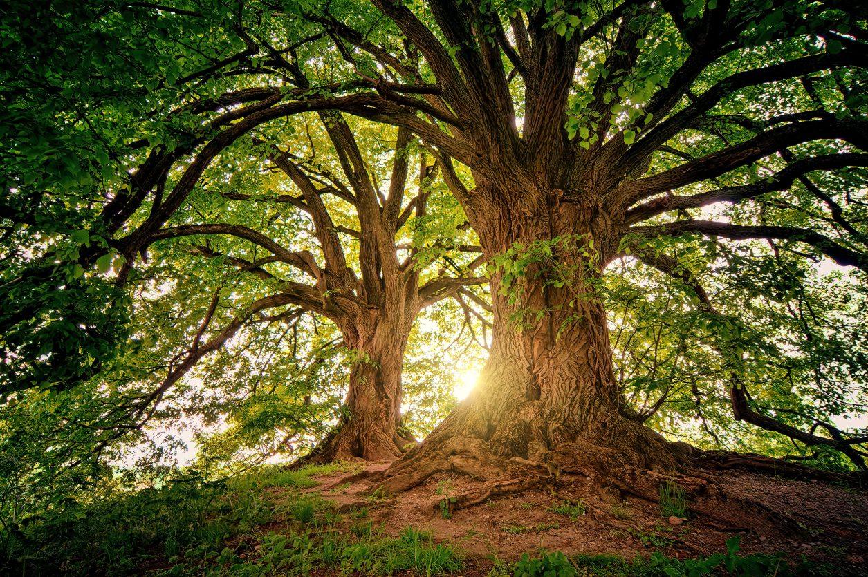 trees