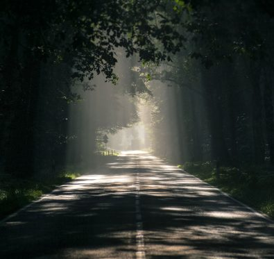 Light shining through trees on dark road