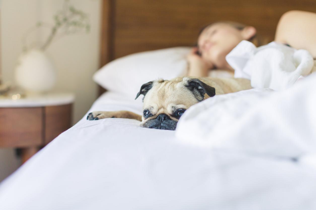 sleeping woman with dog